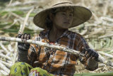 Sugarcane worker