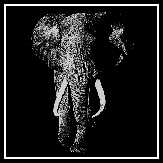 African Elephant on 20 cm x 20 cm Black Glass