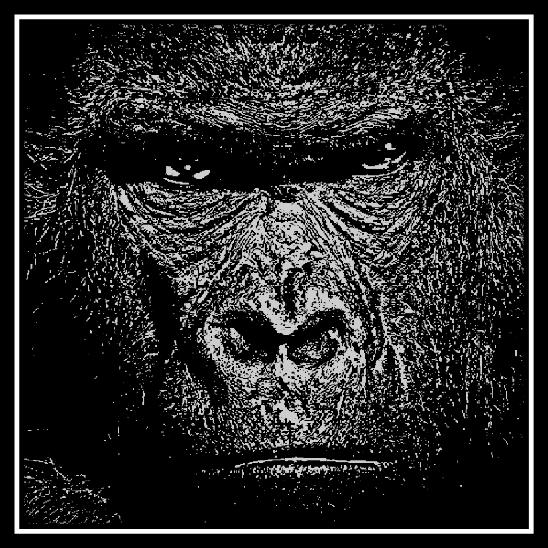 Closeup of Gorilla on 20 cm x 20 cm Black Glass