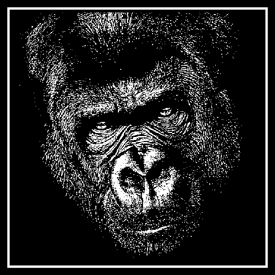 Male Gorilla Head on 20 cm x 20 cm Black Glass