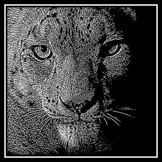 Closeup of Puma Head Engraved onto 20 cm x 20 cm Black Glass