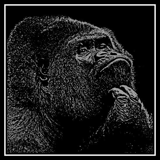 500 x 500 Silverback Gorilla