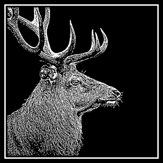 500 x 500 Stag