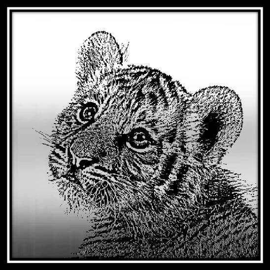 500 x 500 Tiger Cub 1