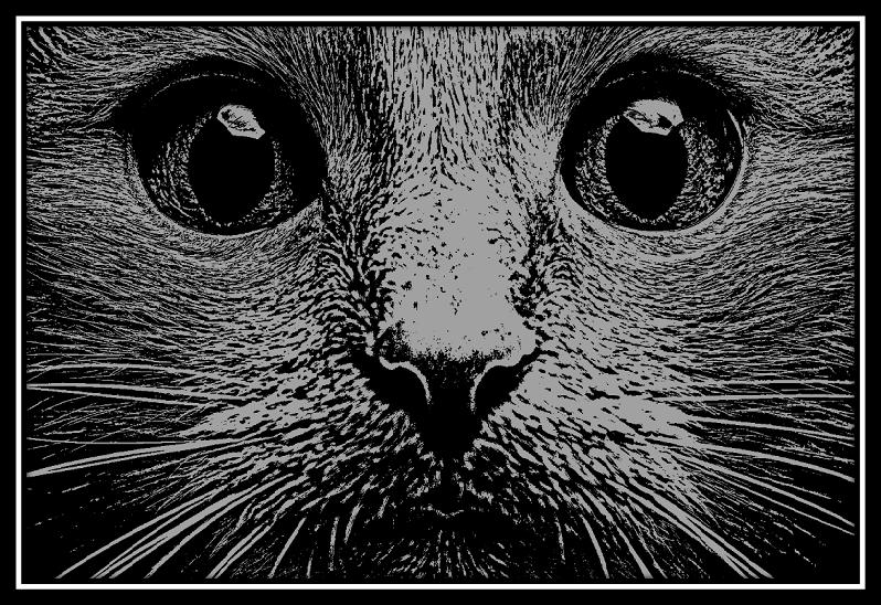 750 x 500 Cat