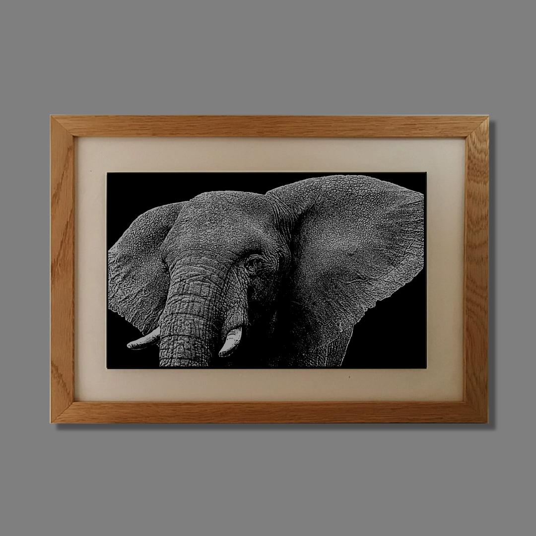 African Elephant - £149