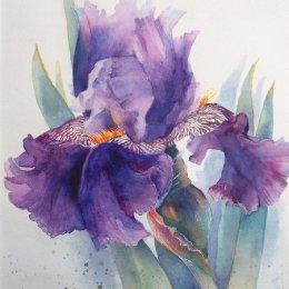 Portrait of an iris