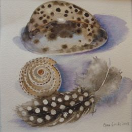 Spotty feather and shells