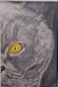 Cat using Scratch Technique with pencil