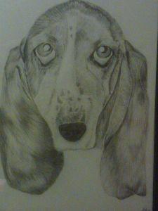 max drawing of bassett hound