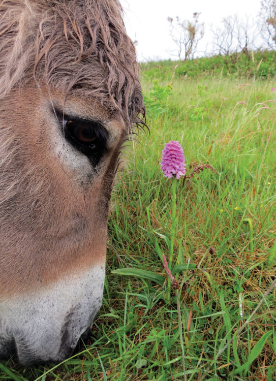 83. Donkey & Orchid