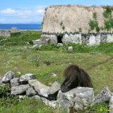 95. Cottage & Pony, Aran Islands