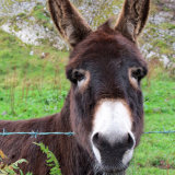 88. Donkey, West Cork