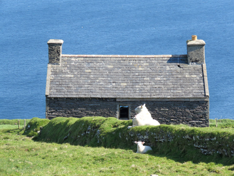 155 Finding the Shade, Dursey Island, West Cork