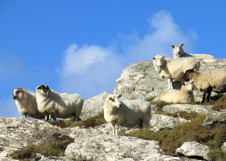 75. Mhuintir Bhaire, Sheep's Head
