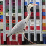 78. Pop Art Heron, Schull