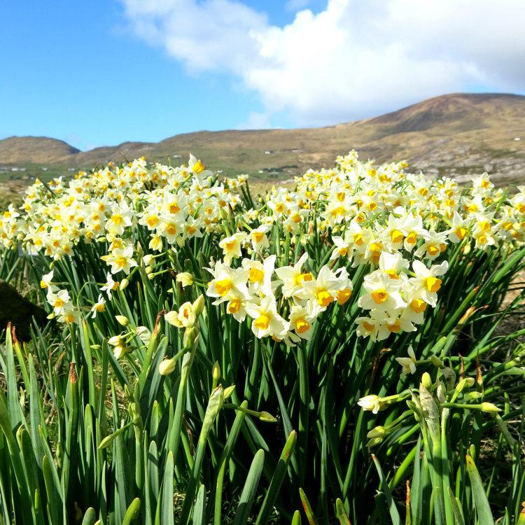 47. Spring Time, West Cork