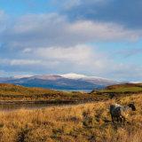 139. Winter Colours, Sheep's Head