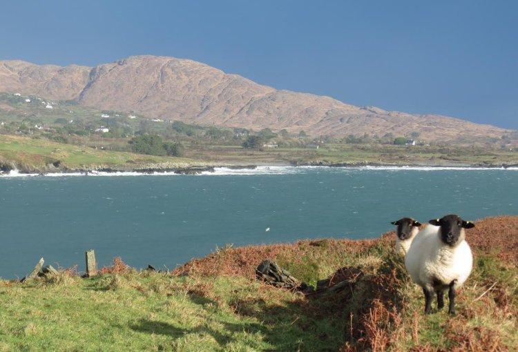 135. Winter Woollies, Sheep's Head
