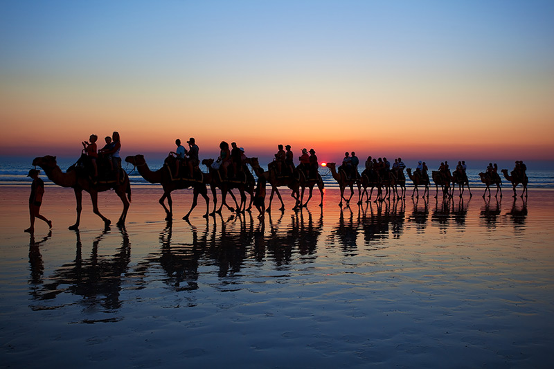Cable Beach Camels 2