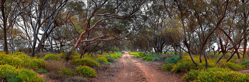 Mallee Track