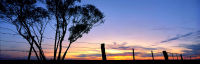 Mallee Fence Line