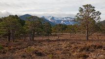 Rothiemurchas woodland