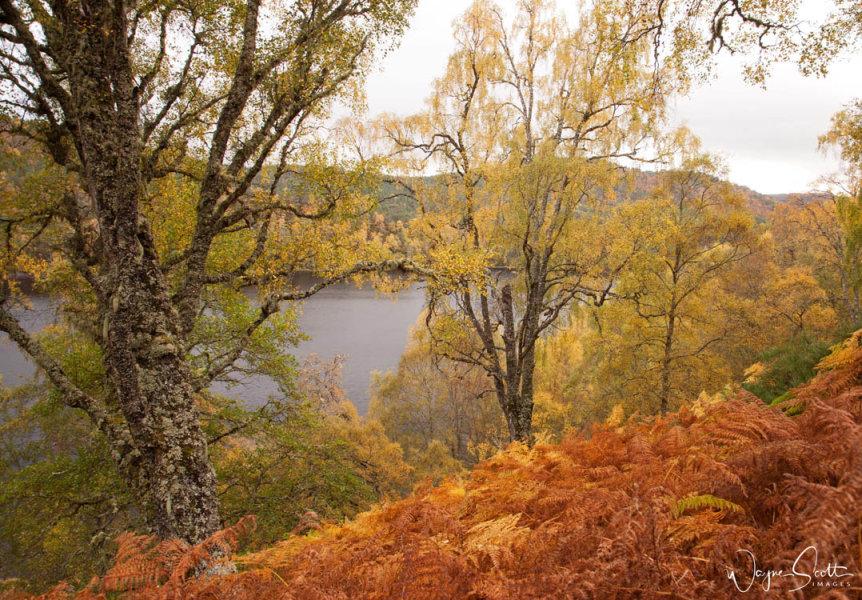 Glen Affric colours 2