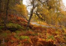 Glen Affric colours