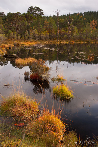 Lochan Reflection
