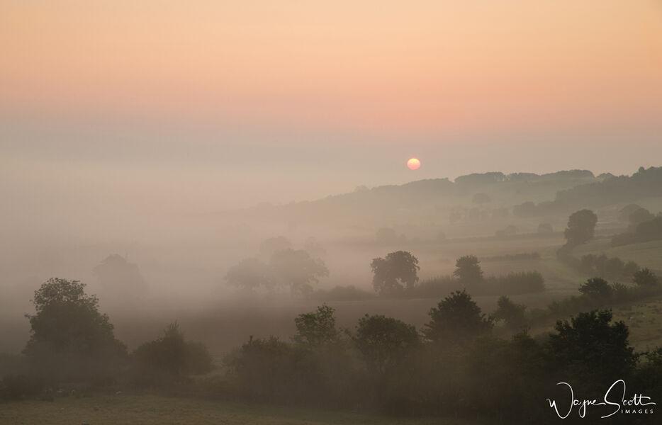 Misty Sunrise Harewood