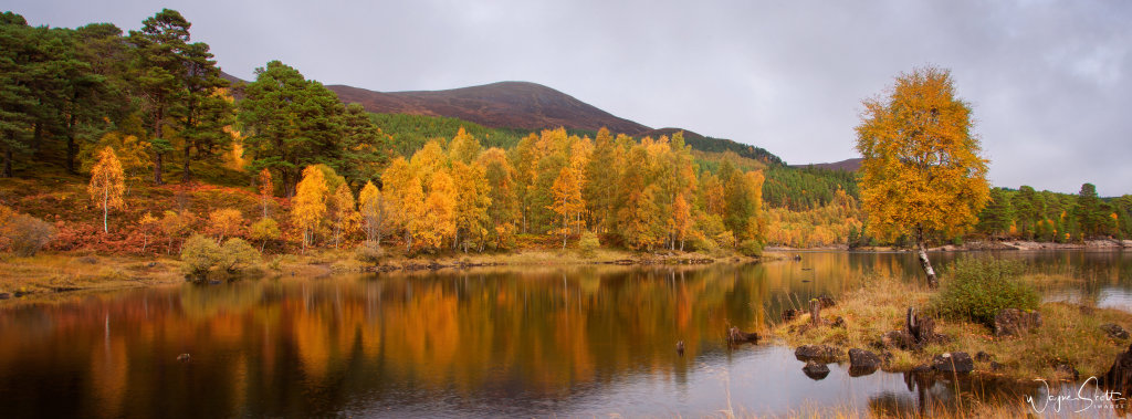 Glen Affric Reflection