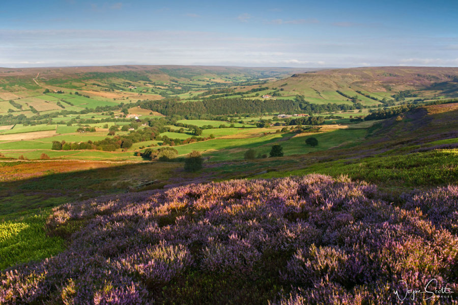 Farndale Heather