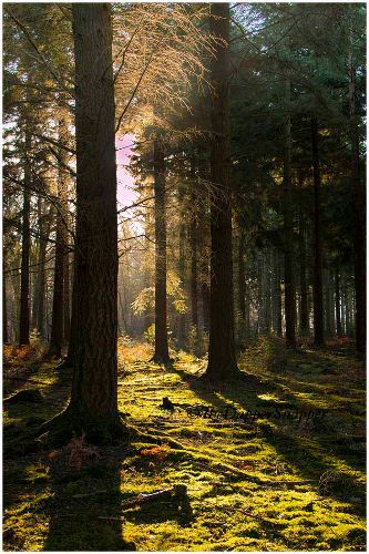 Backlighting by Natures Own Light