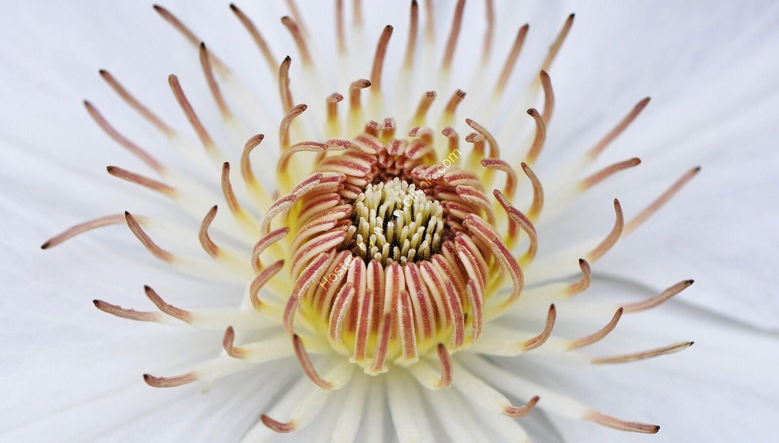 Centre of a flower
