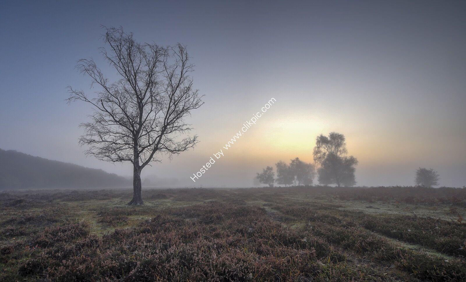 Dawn on New Forest Heathland