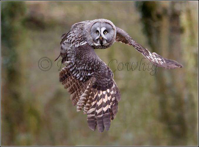 Eagle Owl..Highly Commended..Bernard Hutton Trophy