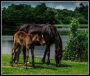 Mum with Foal