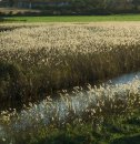 6 Reed beds