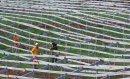 HC Solar Landscaping Frank Colebrooke