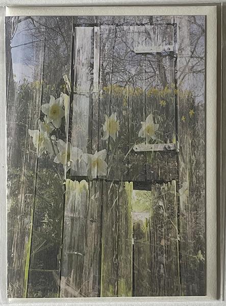 Image of old barn door overlaid with daffodils