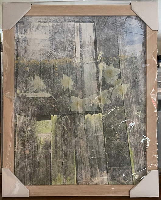 Composite photograph of an old barn door overlaid with daffodils