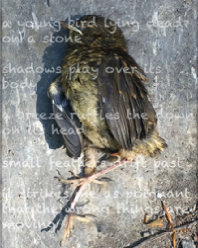 Photograph of dead baby bird wit text overlaid