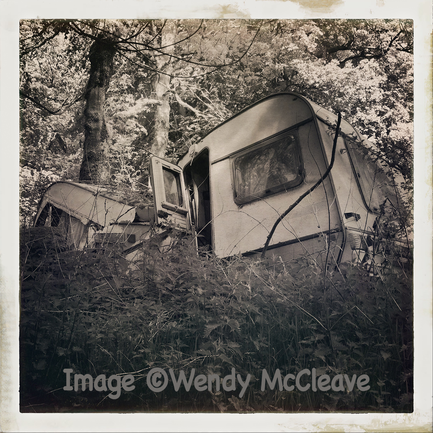 Black and white photograph of a caravan crushed by a tree