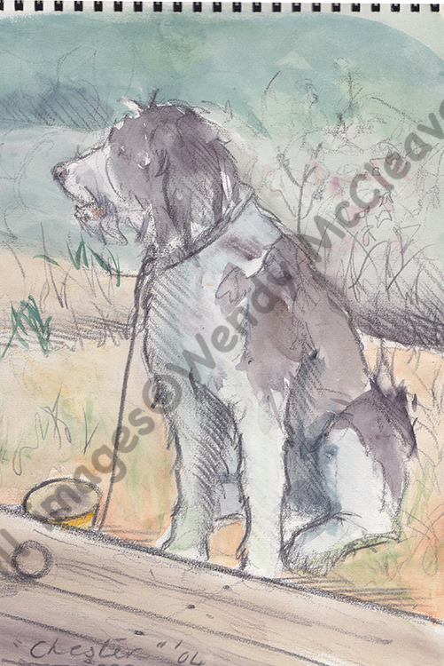 A pencil and wash sketch of my late dog, Chester, at the beach hut in Mudeford