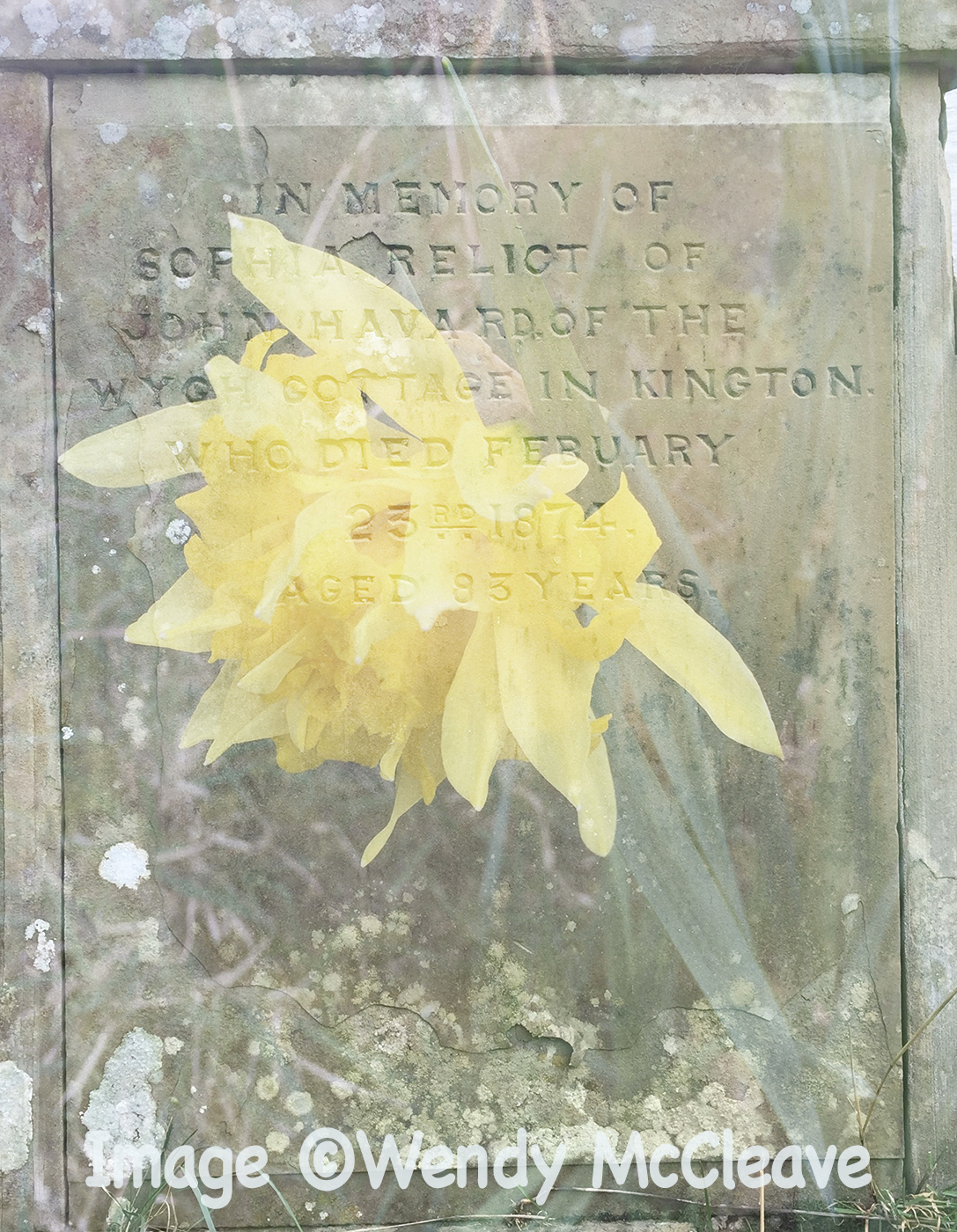 Composite image of gravestone and daffodil