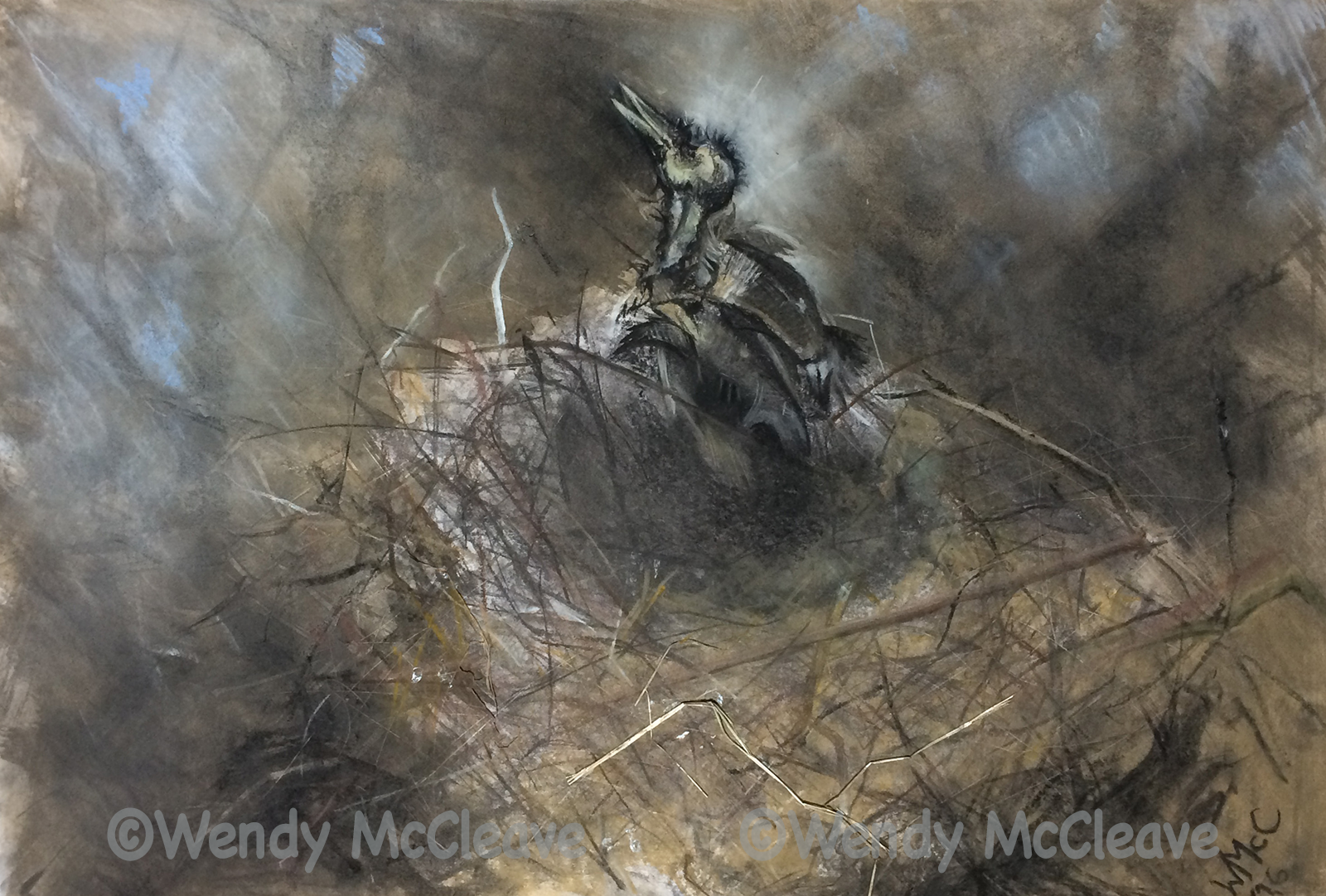 Charcoal and pastel drawing of a corvid nest with mummified young bird.