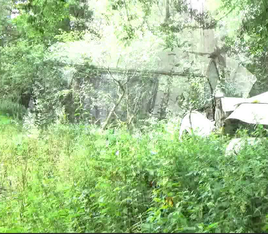 almost transparent image of a caravan with green foliage in front