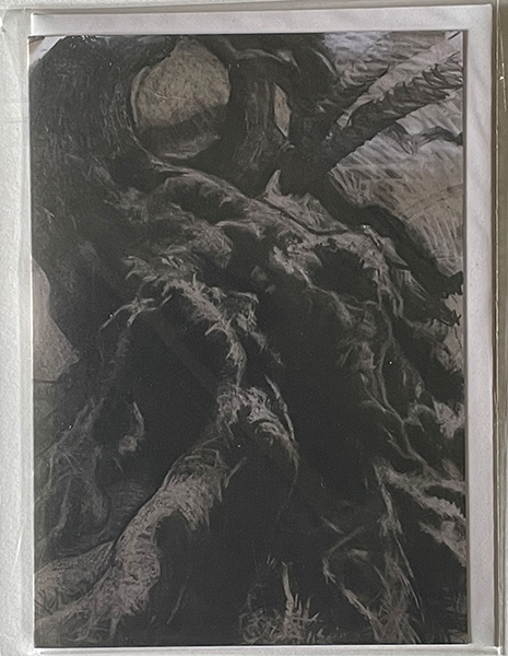 Charcoal drawing of knobbly tree trunk