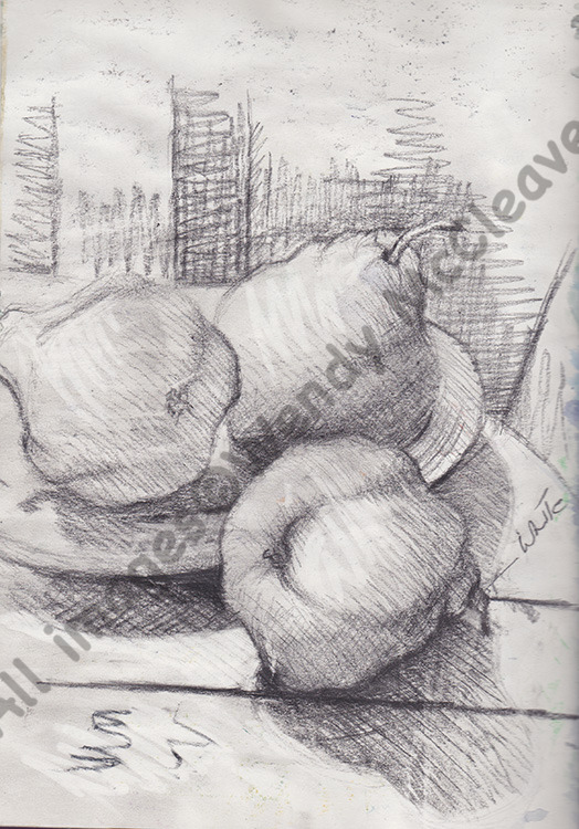 Creta noir sketch of some big, knobbly pears.
